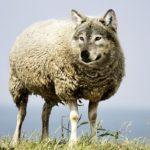 Ein Immunsystem gegen Wölfe im Schafspelz