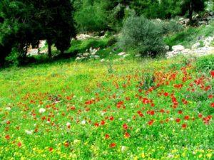 06spring_in_jerusalem_forest