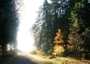 2007-10-14herbstwald
